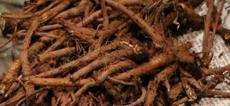 dandelion root to increase breast size
