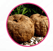 pueraria mirifica to increase breast size