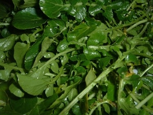 watercress leaf for breast enlargement